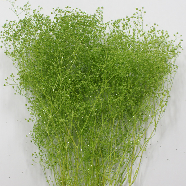 Preserved soft Minica Sumi grass [<< preserved flower Kasumi grass >> do000010-705-1 green lam such as earth farm, Tokyo temple etc]/ artificial flower material parts earth farm