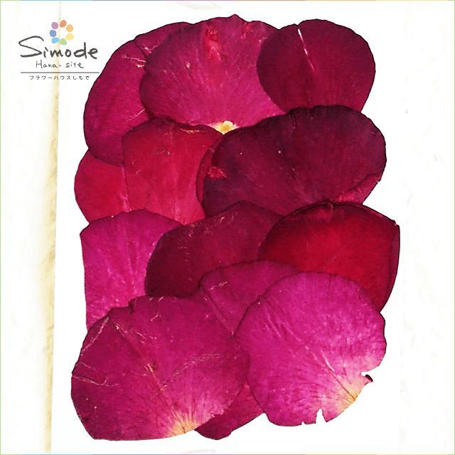 鮮やかな赤色のバラの花びらを集めました S-455 バラの花びら 赤 12枚 ばら ローズ ストアー 押し花素材 押し花パック 手作り 山野草の押し花 ついに再販開始 キット 薔薇 飛騨