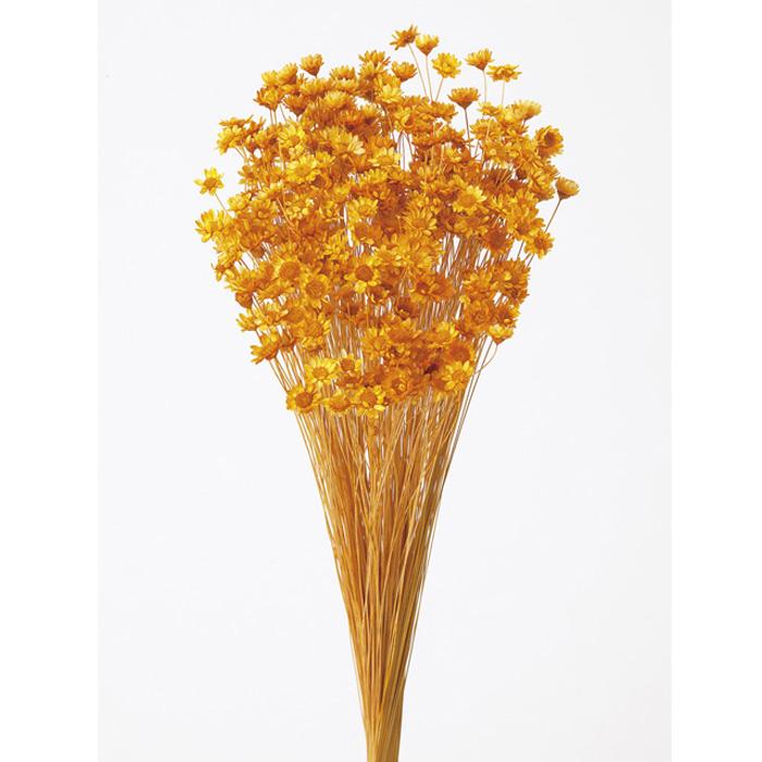 大地農園 スターフラワー ブロッサム 超安い 1束 市場 約18g オレンジ ドライ 30191-351 10%OFFクーポン配布中