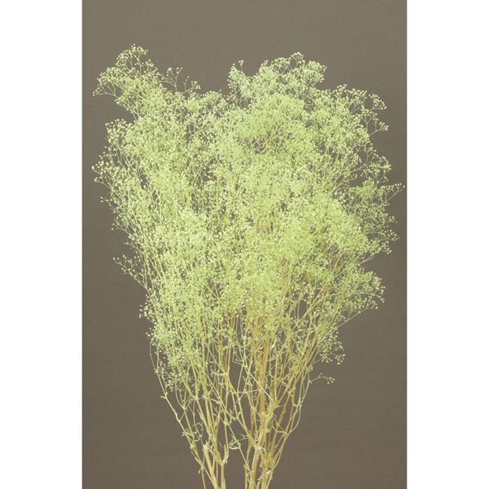 日本製 大地農園 ソフトミニカスミ草 約22g プリザーブドフラワー ギフト プレゼント ご褒美 ミントグリーン 00010-720