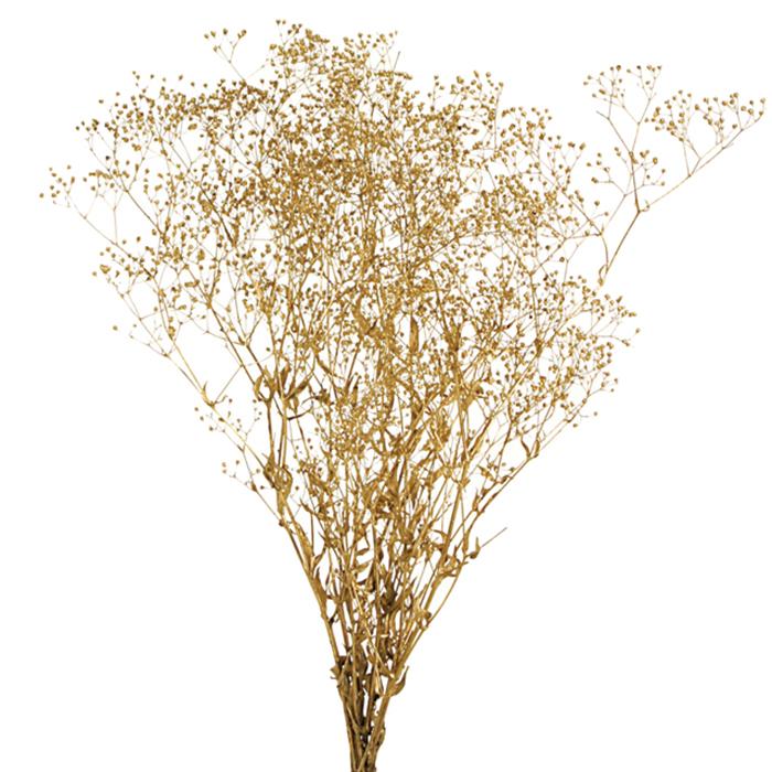 大地農園 店舗 スーパーソフトミニカスミ草 20g ゴールド セール大特価 プリザーブドフラワー 00020-902 百貨店
