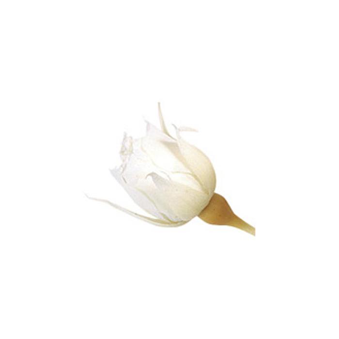大地農園 スージー 誕生日/お祝い 市販 20輪 ピュアホワイト アフターセール開催中 プリザーブドフラワー 02400-001