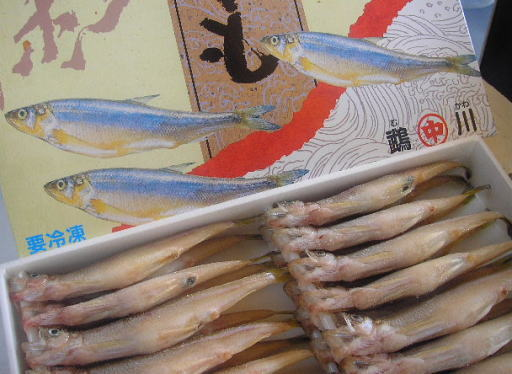 旨み溢れる本ししゃも 身を楽しむならオス 北海道産本ししゃも オス 早割クーポン ファクトリーアウトレット 大30尾