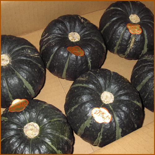 ほくほくの小さなかぼちゃをどうぞ 送料無料 セール価格 一部地域を除く 高級な 北海道産坊ちゃんかぼちゃ 約3kg