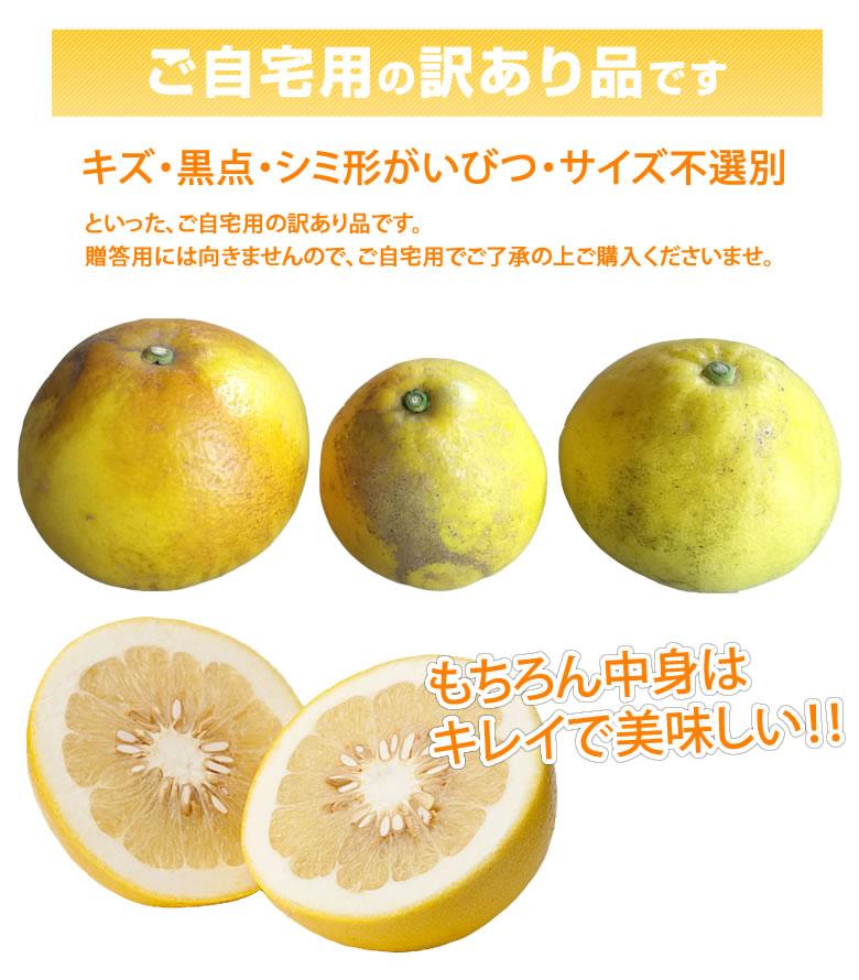 パール柑 文旦  訳あり 5kg S~2Lサイズ混合 無選別 熊本県産 2箱購入で1箱おまけ 上品な甘みと香り グレープフルーツ みかん
