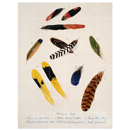 Collection of Bird Feathers / IXXI ウォールピクチャーsize samll 80x100cm 壁を傷つけない 簡単取付 賃貸物件の模様替えにも ヨーロッパで大人気な 名画が楽しめます。