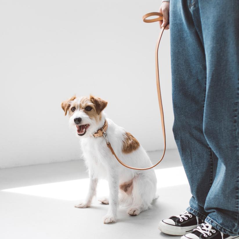 【犬 リード】ヌメ革2枚仕立てのリードです。首輪や胴輪と一緒にどうぞフリーステッチ / おしゃれ / 日本製 / ペット / シンプル/犬 リード 革 【犬 リード】オリジナル ヌメ リング リード M サイズ 犬用犬リード 犬 リード 小型犬 中型犬 革 皮 革製 レザー おしゃれ 犬のリード