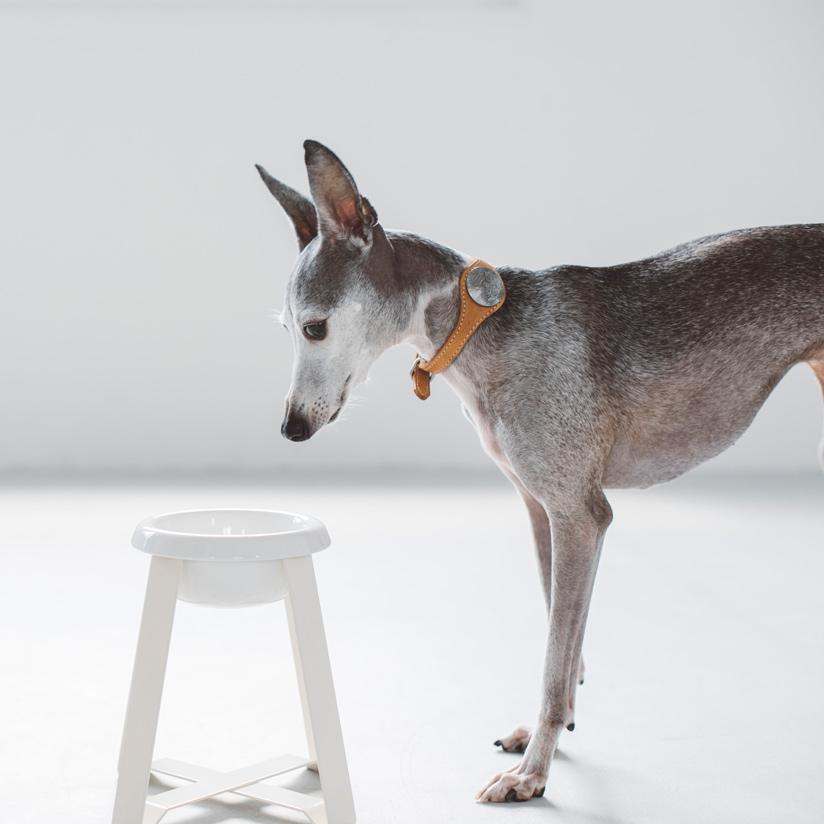 pecolo Food Stand S(hightall) 陶器 フードボウルスタンド 犬 フードボウル