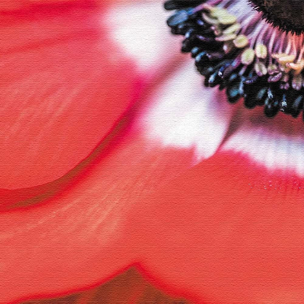 竹内陽子 ファブリックパネル インテリア 雑貨 アート 花 写真 yt-300-赤-007 57cm × 57cm