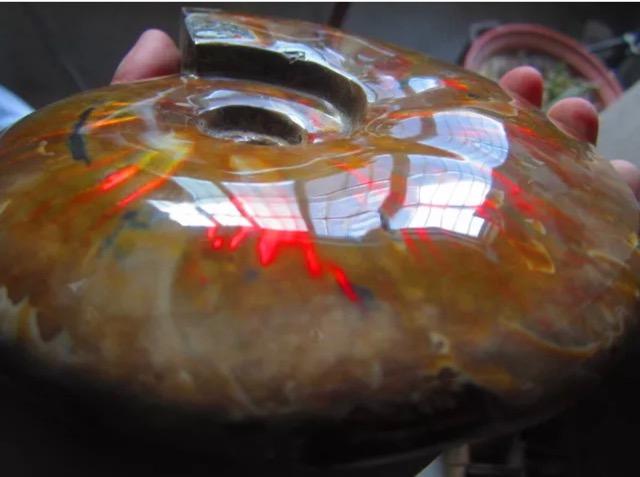一点物★1009g 巨大 アンモライト 宝石化遊色レインボーアンモナイト 化石 標本【 送料無料 】レア 風水