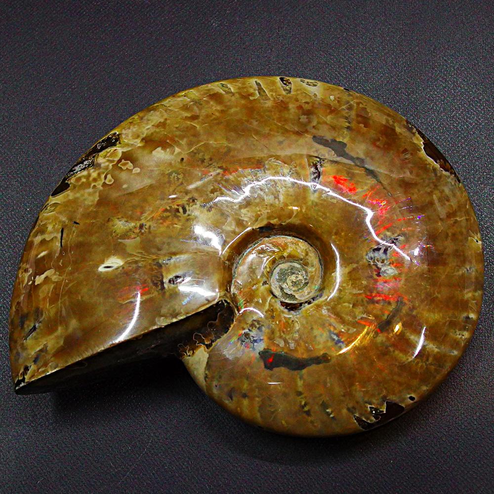 風水で『七色繁栄石』と呼ばれる宝石 一点物 494g 巨大 アンモライト【 送料無料 】 宝石化遊色 レインボーアンモナイト 化石標本