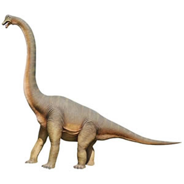 FRP恐竜オブジェ 立ち向かうブラキオサウルス 置物 ジュラ紀 草食恐竜 竜脚類 標本 博物館 店舗 イベント ディスプレイ 実物大 等身大 リアル 【whlny】
