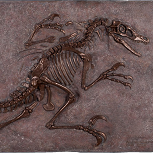 FRP恐竜オブジェ ヴェロキラプトルの化石(ブロンズ仕立て) 置物 白亜紀 肉食恐竜 獣脚類 標本 博物館 店舗 イベント ディスプレイ 実物大 等身大 リアル 【whlny】
