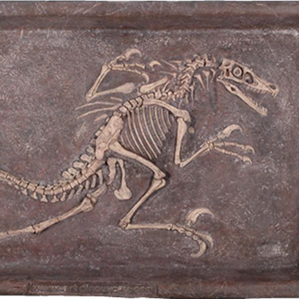 FRP恐竜オブジェ ヴェロキラプトルの化石 置物 白亜紀 肉食恐竜 獣脚類 標本 博物館 店舗 イベント ディスプレイ 実物大 等身大 リアル 【whlny】