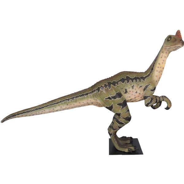 FRP恐竜オブジェ ディロング・パラドクサス 置物 白亜紀 肉食恐竜 獣脚類 ティラノサウルス 標本 博物館 店舗 イベント ディスプレイ 実物大 等身大 リアル 【whlny】