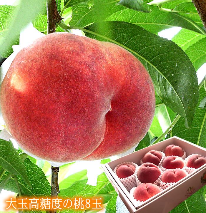【送料無料】【お中元】【暑中見舞い】あま~い桃です!糖度13.5以上!1玉300g以上の大玉です![大玉高糖度の桃8個入り]