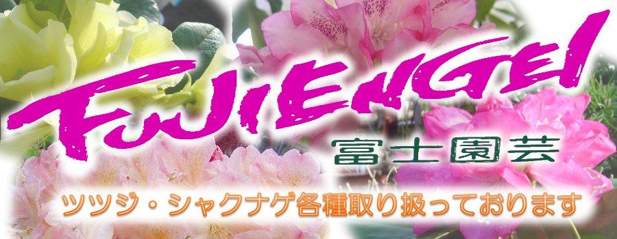 富士園芸楽天市場店:ツツジ・シャクナゲ専門店