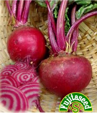 紅と白のコントラストが美しいうずまきビーツ 1着でも送料無料 野菜のタネビーツ 新作多数 キオッジャ2藤田種子