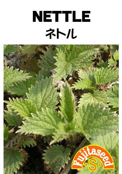 葉を利用してのハーブティー免疫系の働きを活性化! 【藤田種子】ネトルハーブ種