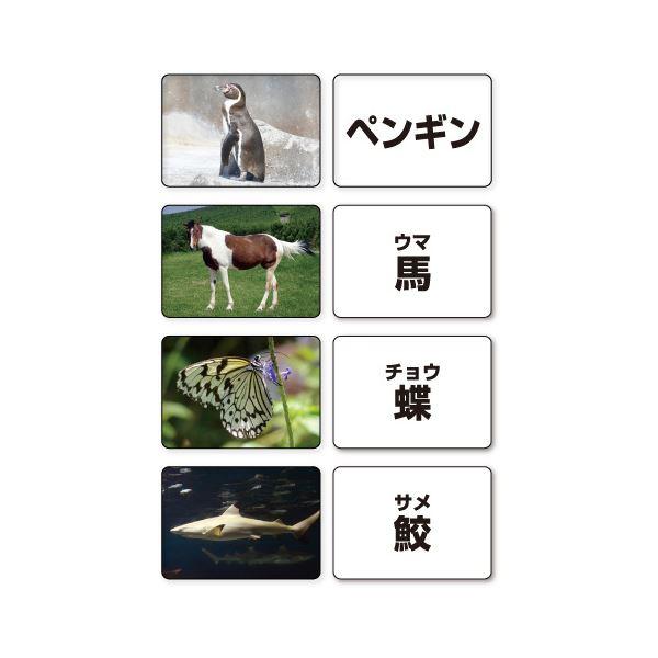 多目的言語カードセット 期間限定の激安セール 流行のアイテム 動物 KK0491-1