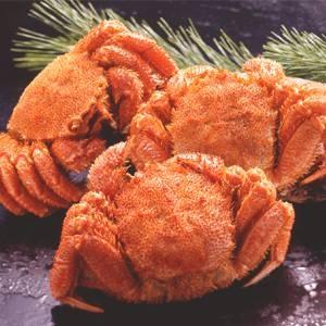 オホーツク産「毛がに」北海道ならではの濃厚なカニ味噌もたっぷり! 〔北海道産〕ボイル毛ガニ姿(約400g×3尾)【代引不可】