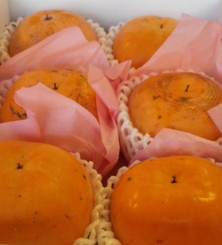 熊本益城産シンデレラ太秋 6玉 化粧箱 約2kg10月~収穫はじまります