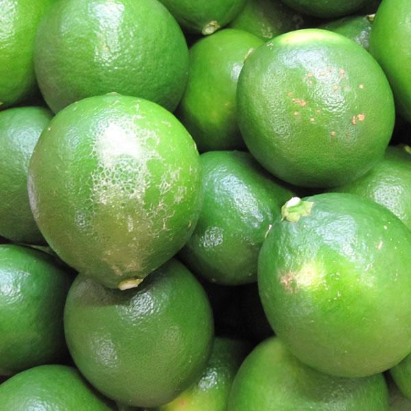 熊本産有機肥料を使用したレモンノーワックス 激安超特価 国産レモン熊本産栽培期間中無農薬A級品5kgマイヤーレモン 熊本産レモン メイヤー ノーワックス AL完売しました A級品5kg週2~3日ですので期日指定はできません 九州熊本さ角町産有機肥料を使用