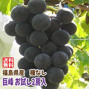 ぶどうの王様 巨峰 深紫の小さい果実の中には甘~い果汁がタップリと詰まっています 福島県産の 種なし ショッピング 1房300g~450g 2房入 お試しセット お試し 発送時期:9月下旬頃~10月中旬頃まで予定 保証