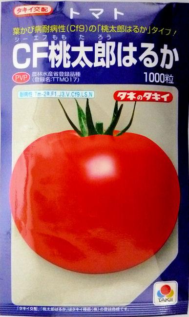 【タキイ種苗】CF桃太郎はるかトマト 1000粒