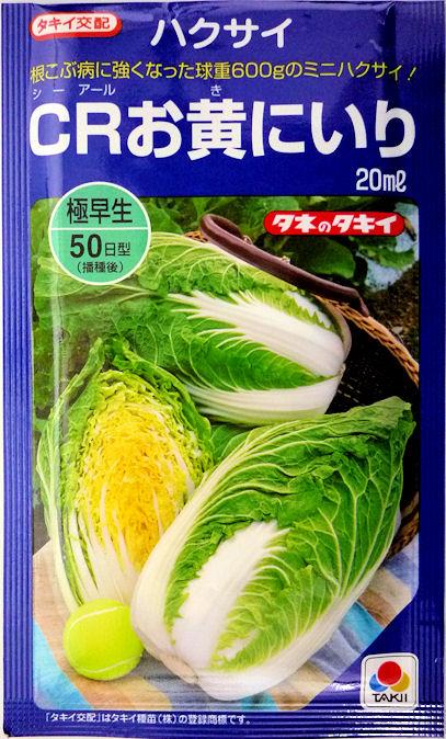 ハクサイのタネ べと病 根こぶ病に強い 秀逸 食べきりサイズの極早生黄芯ミニハクサイ 初回限定 20ml タキイ種苗 CRお黄にいり白菜