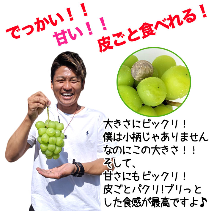 Reservation accepted Grape Shine Muscat for gifts Approximately 1 kg 2 bunches 1000 g Free shipping Nagano Prefecture Directly from the production area Grape grapes