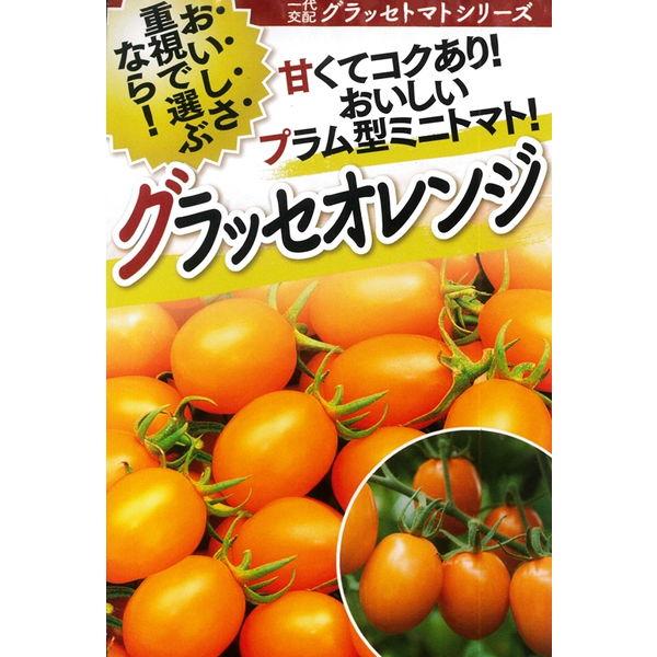 トマト(ミニトマト) 種 【グラッセオレンジ 1000粒】