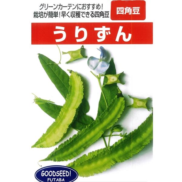 早く収穫できる四角豆 四角豆 種 1DL 永遠の定番 うりずん 輸入