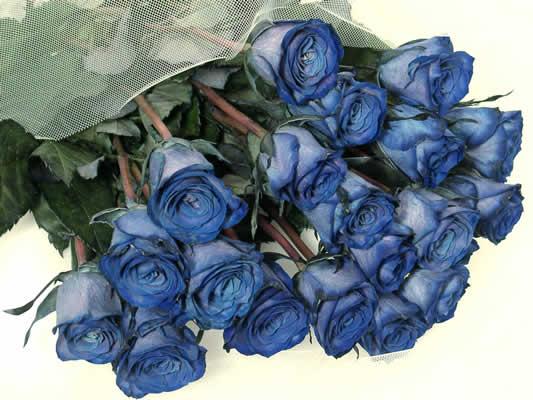 告白 青バラ(輸入品・吸上げ染め)生花かすみ草花束
