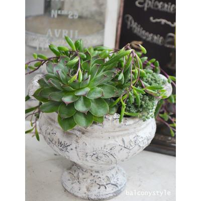 再販ご予約限定送料無料 クラシカルなスタイルが新鮮なオーバル型陶器鉢 ダイナスティオーバルポット 鉢 定番 植木鉢 ガーデニング