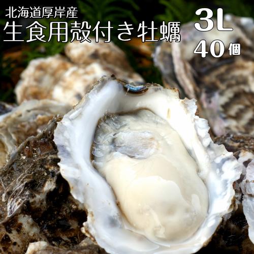 【マルえもん 3Lサイズ40個】北海道厚岸産本養殖牡蠣生食用