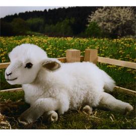 ケーセン社 ぬいぐるみ ねそべり子羊 / LAMBKIN LYING