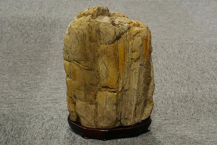 木化石 白神山地産