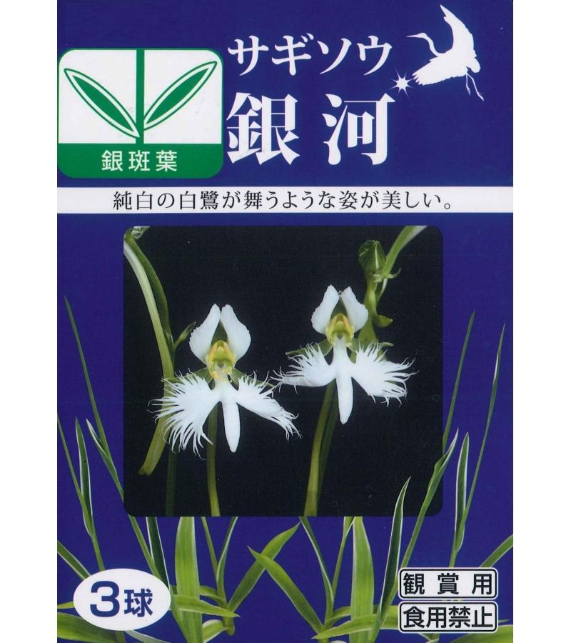 春植え球根 サギソウ「銀河」3球入り鷺草