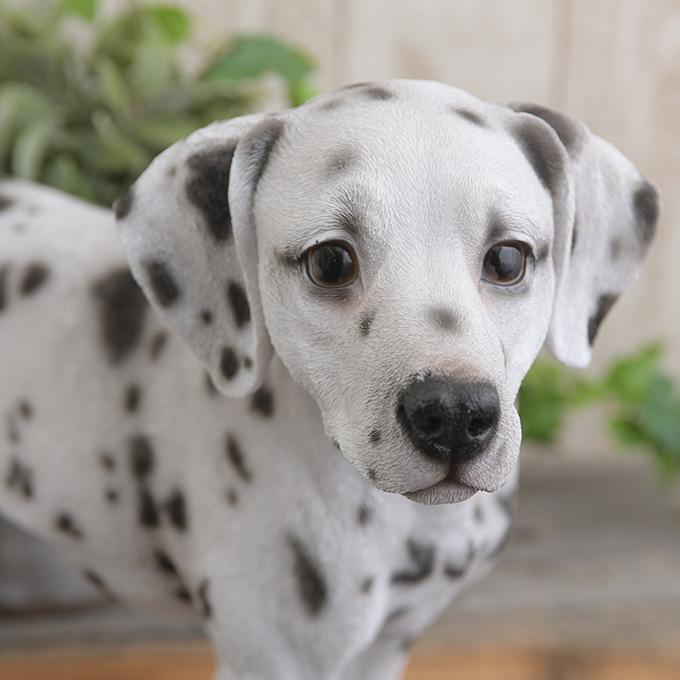 本物そっくり 犬のオブジェ ダルメシアン わんちゃん 置物 オーナメント リアル ドッグ こだわり 毛並み DOG 愛嬌 カフェ インテリア 玄関 ベランダ アート 飾り かわいい