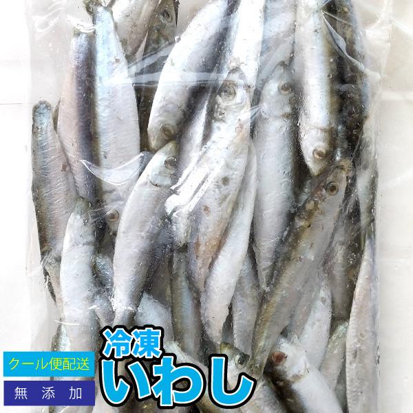 アクアリウム 大型魚 いわし エサ 3袋セット 春の新作 冷凍餌 全国一律送料無料 冷凍イワシ 約1.5kg 約10-12cm前後 ※別途クール便送料 爬虫類 両生類 大型魚のエサ クール便配送 DBP 約500g×3袋