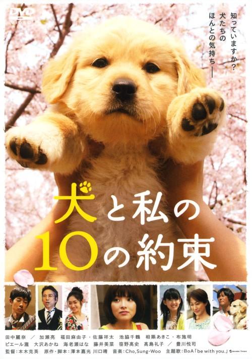 3980円以上で送料無料 中古 犬と私の10の約束 DVD 邦画ファミリー 正規逆輸入品 毎週更新 動物 田中麗奈DVD