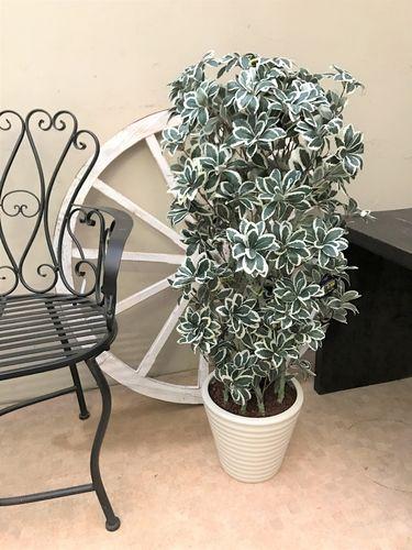 人工観葉植物 ホンコンカポック H100cm