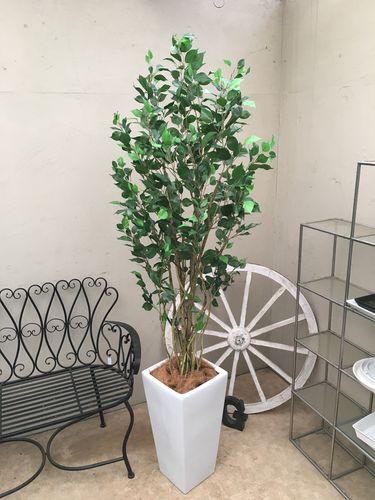 人工観葉植物 ベンジャミン H190-200cm