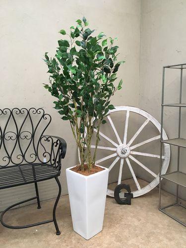 人工観葉植物 ベンジャミン H140-150cm