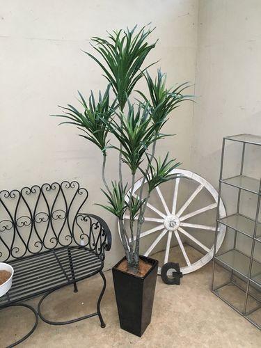 人工観葉植物 ドラセナコンシンネ H180-190cm