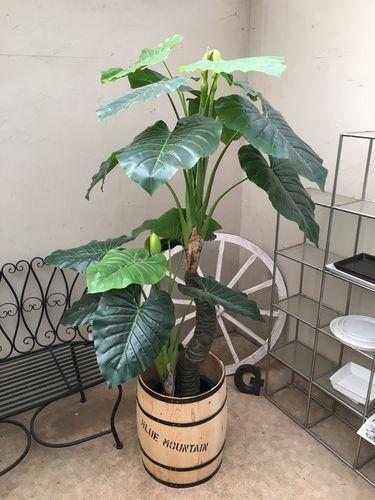 人工観葉植物 クワズイモ 樽セット H170-180cm