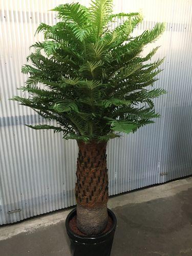 人工観葉植物 ソテツ H170cm