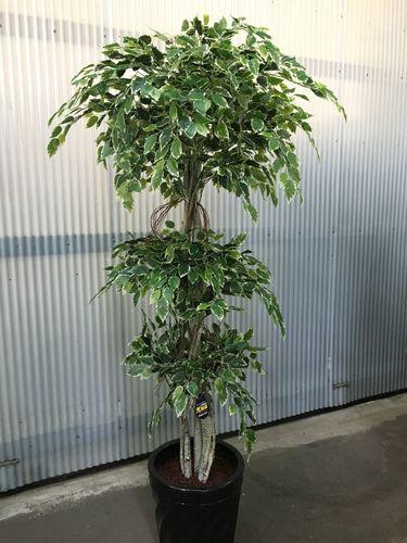 人工観葉植物 斑入りベンジャミン3段 H190cm