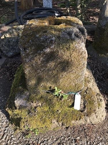 石 苔付き